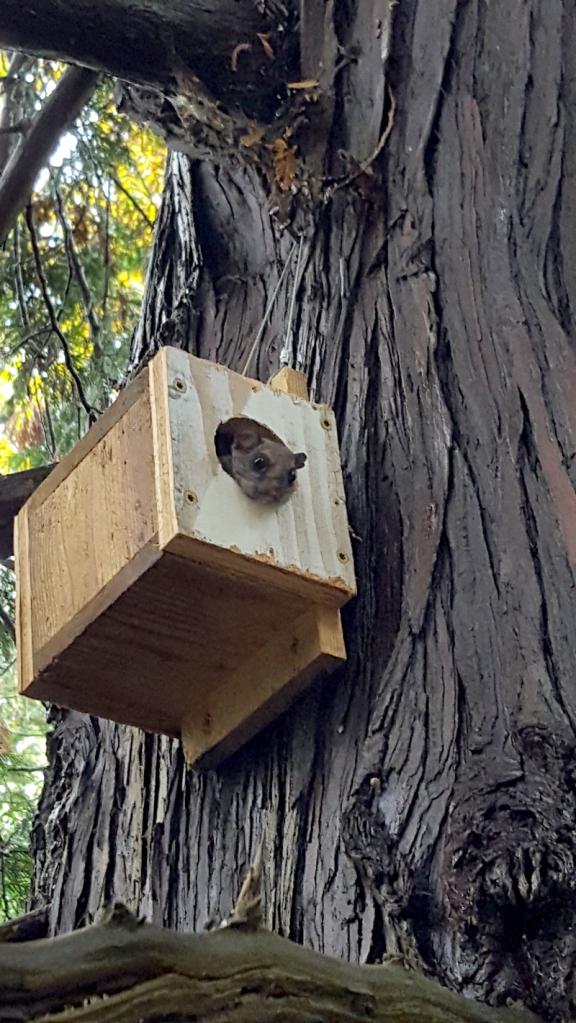 squirrelhome