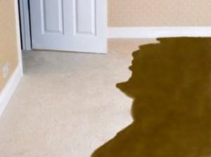sewage-carpet