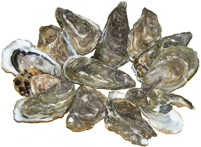 Pacific_oysters_01
