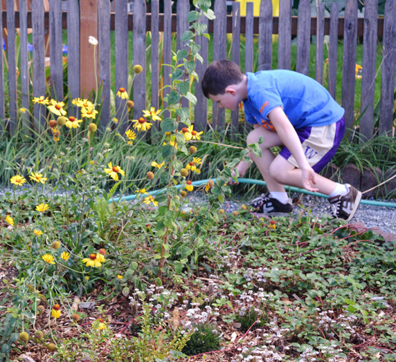 A future climate change problem-solver gives his neighborhood_s new raingarden a good soaking.