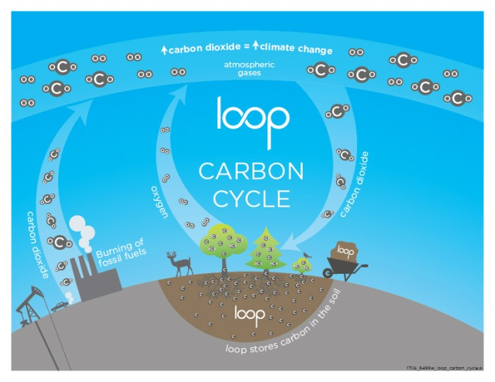 1706_8499w_loop_carbon_cycle_