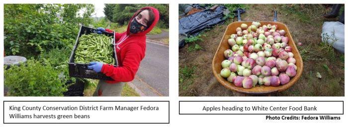 CitySoil Farm harvest