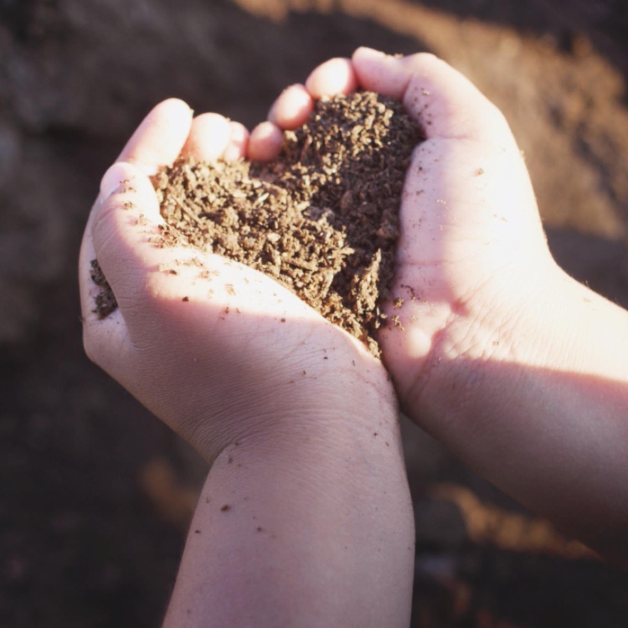 hands scooping dirt