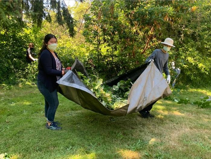 Interns removing blackberries (invasive species) at White Center Heights Park